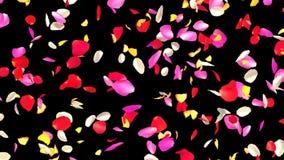 Blandade Rose Petals Fall lager videofilmer