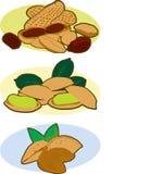 Blandade tokiga mandlar för illustrationjordnötpistascher Royaltyfri Bild