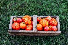 Blandade tomater i bruna pappers- påsar Olika tomater i bunke Arkivfoto