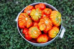 Blandade tomater i bruna pappers- påsar Olika tomater i bunke Fotografering för Bildbyråer