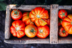 Blandade tomater i bruna pappers- påsar Olika tomater i bunke arkivfoton