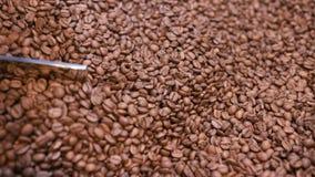 Blandande bönor av kaffe efter stek lager videofilmer