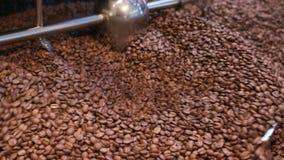Blandande bönor av kaffe efter stek stock video