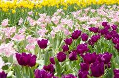 Blandat färgblommafält Fotografering för Bildbyråer