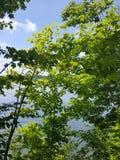 Blandat himmel och vatten Fotografering för Bildbyråer