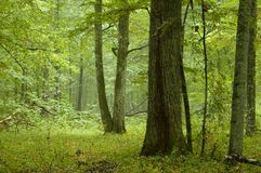 blandat naturligt regn för skog Royaltyfria Foton