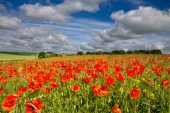 Blandford Dorset, England royaltyfria bilder