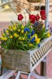 Blandning av färgrika blommor i kruka på Boston gator Royaltyfria Bilder