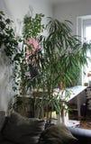 Blandning av houseplants i det vita rummet Royaltyfri Bild