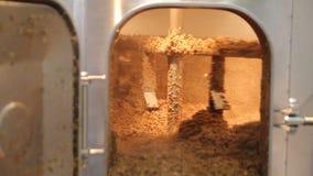 _ Blandning av malt i den brygga behållaren Använd malt, når att ha bryggat process stock video