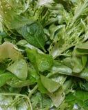Blandning av ny organisk gräsplan och röda grönsallatsidor Arkivfoton