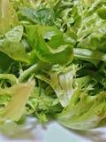 Blandning av nya organiska gröna grönsallatsidor Arkivbilder