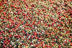 Blandning av peppar Royaltyfri Bild