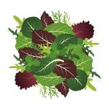 Blandning av salladsidor Arugula-, spenat- och grönsallatblad Vektorillustrationuppsättning i plan stil stock illustrationer