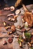 Blandning av skogchampinjoner Fotografering för Bildbyråer