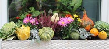 Blandningen av den härliga livliga terrassnedgången blommar och pumpa Royaltyfria Bilder