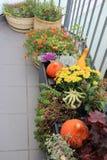 Blandningen av den härliga livliga terrassnedgången blommar och pumpa Arkivbilder