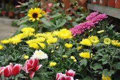 Blandningen blommar från den cameron höglandet Royaltyfri Bild