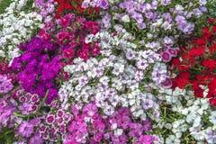 Blandningfärgblomma arkivfoto