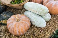 Blandninggrönsaker (Bergamot, squashars pumpa) Royaltyfri Foto