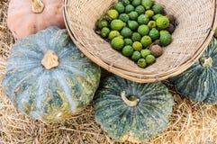 Blandninggrönsaker (Bergamotpumpa) Royaltyfria Bilder
