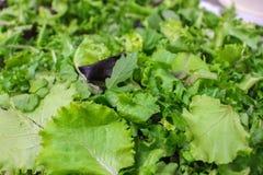Blandningslut för grön sallad upp Royaltyfri Fotografi
