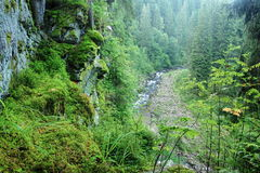 Blanice river in Bohemia Royalty Free Stock Images