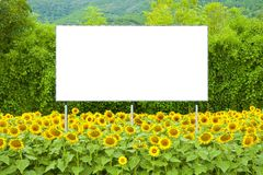 Blank advertising billboard immersed immersed in a field of sunflowers - concept image with copy space royalty free stock photos