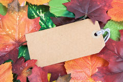 Blank autumn tag label. Empty label amongst autumn leaves royalty free stock photography