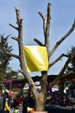 Blank banner,hanging on tree, yellow color.  stock photo