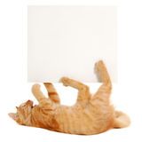 Blank banner in kitten's paws Stock Photography