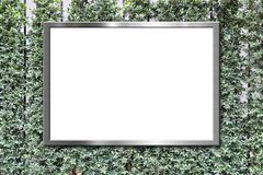 Blank billboard on green leaves wall texture background Royalty Free Stock Image