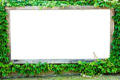 Blank billboard with ivy border Stock Images