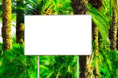 Blank billboard with a space for your information. Tropical paradise background with big green palm leaves stock image