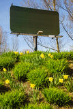 Blank billboard and yellow daffodils flowers. Stock Photos