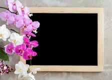 Blank black chalkboard with wooden frame on concrete background. Variety of orchid flowers on the left side and the blank black chalkboard with wooden frame on Royalty Free Stock Photo