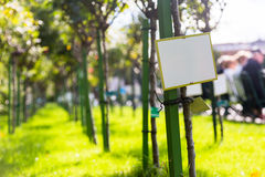 Blank board in a public park with rose garden Royalty Free Stock Image