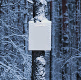 Blank board in the winter forest Royalty Free Stock Image