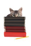 Blank books Royalty Free Stock Images