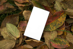 Blank business card template. View at blank business card template stock photography