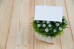 Blank business cards and little decorative tree in white vase on wooden working table with copy space for add text ID. and logo,. Business company concept idea stock photos