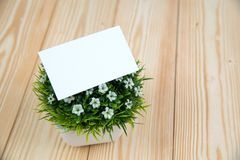 Blank business cards and little decorative tree in white vase on wooden working table with copy space for add text ID. and logo,. Business company concept idea stock image