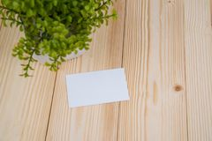 Blank business cards and little decorative tree in white vase on wooden working table with copy space for add text ID. and logo,. Business company concept idea stock photography