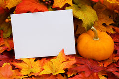 Blank Card Royalty Free Stock Images