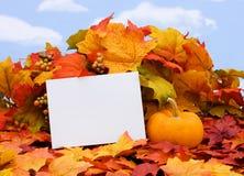 Blank Card stock photography
