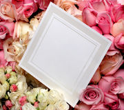Blank Card 5. Elegant blank white card surrounded by beautiful pink and white roses Stock Photo