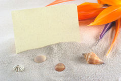 Blank Card on Beach Holiday Setting. Blank card with a bird of paradise flower (lat. Strelitzia reginae) on sand and shells (Selective Focus, Focus on the card royalty free stock photos