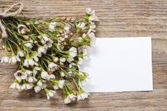 Blank card among chamelaucium flowers (waxflower) Stock Photo