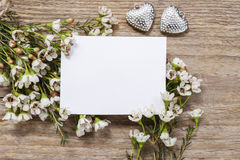 Blank card among chamelaucium flowers (waxflower) Royalty Free Stock Photos
