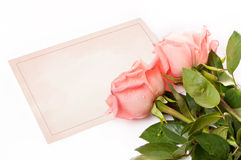 Blank card for congratulations. With roses Royalty Free Stock Photos